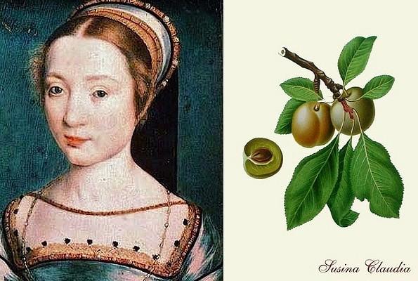 Regina Claudia, la piccola e dolce sovrana che ha dato il nome a una prugna