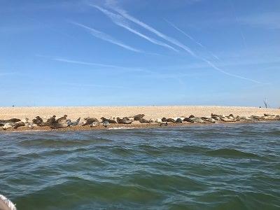 Le foche del Norfolk