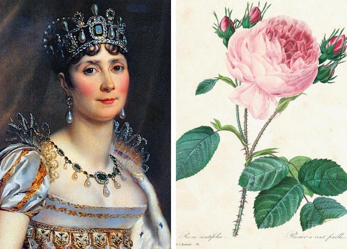 Joséphine e le rose di Redouté